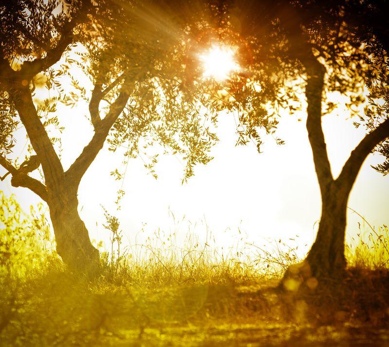 OlivegroveSunset
